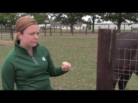 Part 3   No Climb Horse Fence