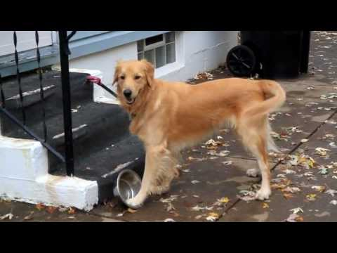 Dog vs. Dish --- This Time it's Personal.