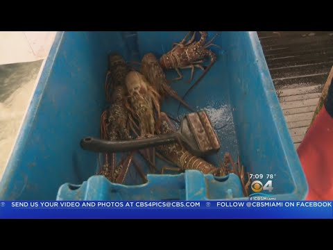 The Business Of Lobster
