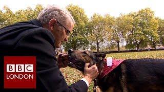 Finn the German Shepherd awarded for bravery – BBC London News