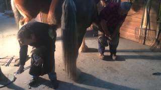 0042 Two Men Shoeing One Horse