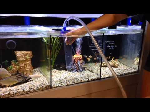How to use a gravel vac to vacuum your aquarium