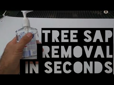 The EASY secret to remove TREE SAP from your car!