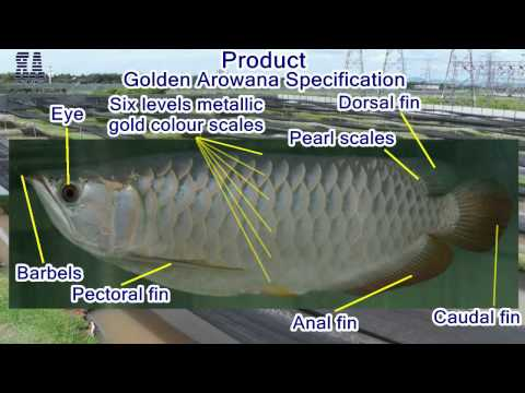 Arowana Ranch Corporate Profile Video Presentation English 2