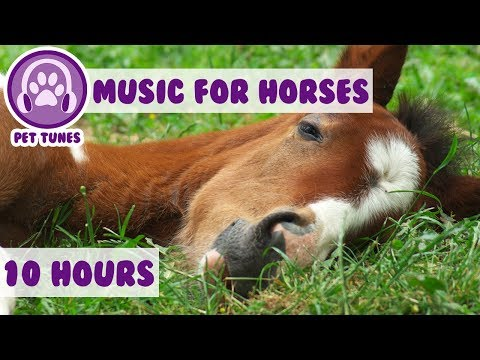 10 HOURS of Best Relaxing Classical Music for Horses! Calm Your Anxious Horse with Tranquil Music!🐴