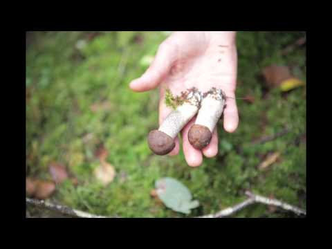 Mushrooms Hunting