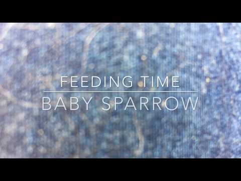 Weekend Farmgirl: Lockwood's Ranch - Feeding Jack Sparrow