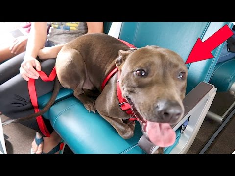 There's a Dog on my Plane! | Evan Edinger Travel