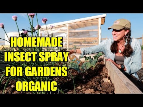 STOP CABBAGE WORMS AND HORN WORMS ~ EASY AND ORGANIC!