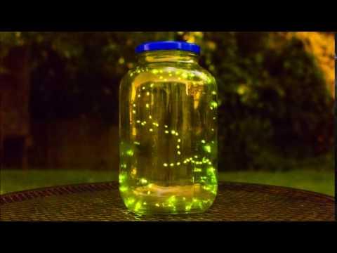 Fireflies (Lightning Bug) Time lapse.