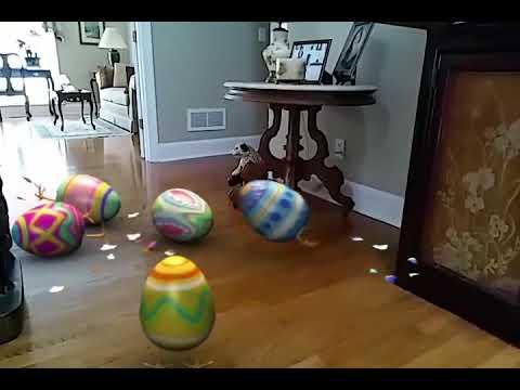 Eggs Delight