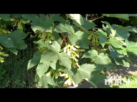Preventing atypical myopathy | Your Horse