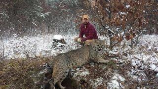 Bobcat 11-12-14 HD