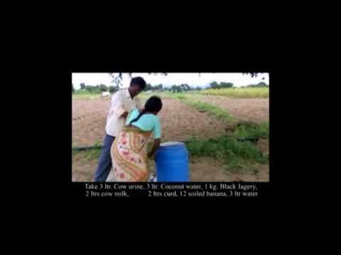 Panchagavya _A.P. ZBNF _ Hindi Dubbed Videos