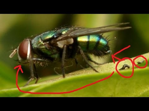 Why you should be afraid of a Housefly