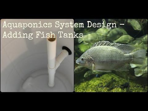 Aquaponics System Design - Fish Tanks, Solids Lifting Overflow, and Bulkhead Adapters