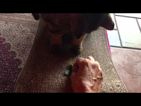 Gracie and Tobey get catnip!