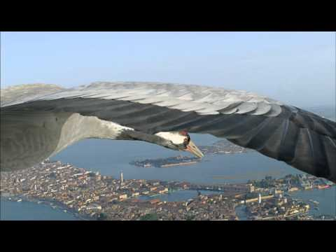 Flying Alongside Common Cranes Over Venice