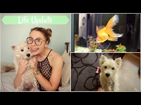 Life Update: Where Were We & What's New | TheDogBlog