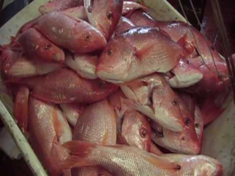 Scale full of snapper, a tale of many fish.