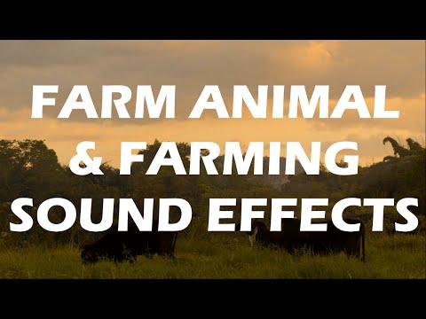 Animal Farm - Excellent Farm Animal Sound Effects & Farming sounds