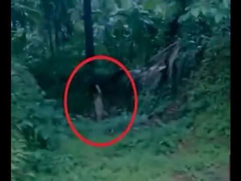 Penampakan Hantu Terjelas  hutan angker