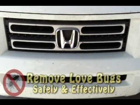 Remove Love Bugs From Any Car Or Truck The REAL Way!