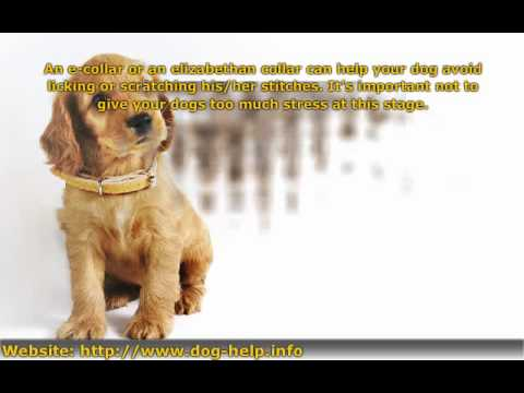 Effective Tips In Taking Care Of Dogs After Surgery