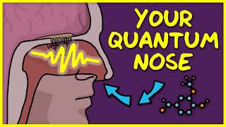 Your Quantum Nose: How Smell Works
