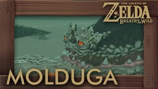 Zelda Breath of the Wild - All Molduga Locations (How to Get Medal of Honor)
