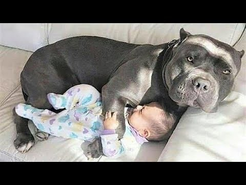 Xxx Mp4 CUTE Nanny Dogs And Babies Funny Dog Loves Baby 3gp Sex