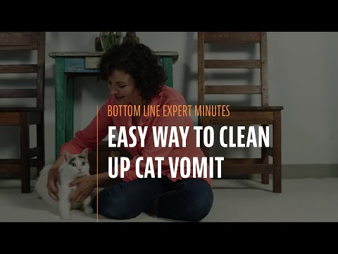 Easy Way to Clean Up Cat Vomit