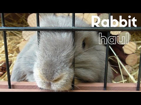 RABBIT HAUL!