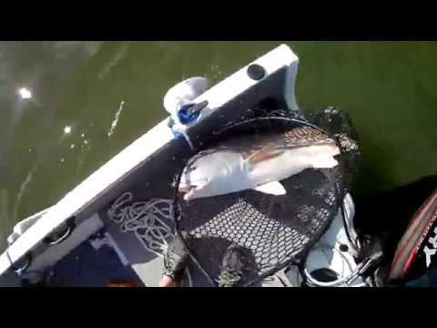 Catching a Bull Red fishing under a bridge in Beaufort South Carolina