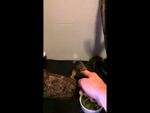 How to train your squirrel pt1