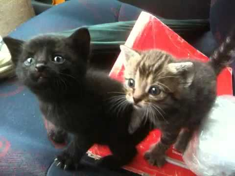 Car sick kitty cats
