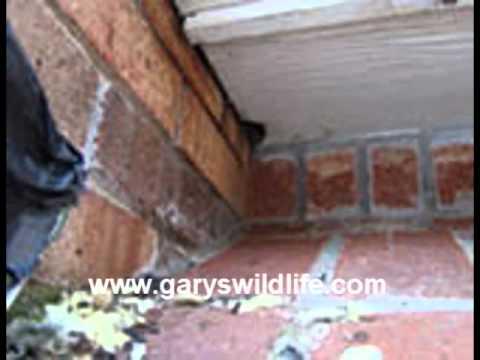 Boston Get Rid of Squirrels-Call (508) 946-0060 -Gary's Wildlife