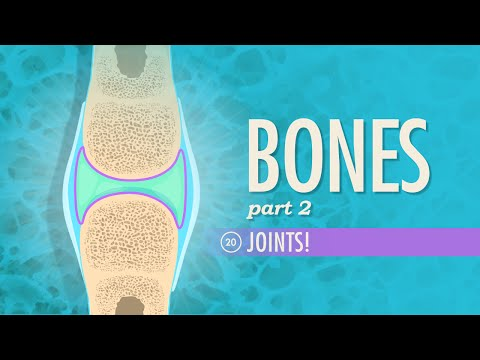 Joints: Crash Course A&P #20