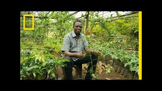 How Growing Trees Helps Fight Poverty in Cameroon | National Geographic