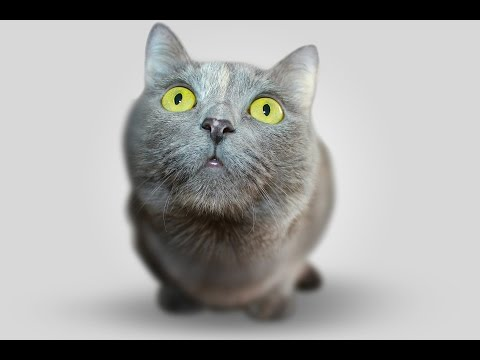 Cat Spraying: How To Get Rid Of Cat Urine Smell