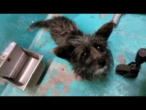 Cabella - 4 Year Old Female Adoptable Doggie at Humane Society of Southern Arizona on 3-4-18