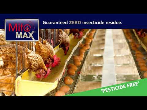 Professional Treatment for Red Poultry Mites in Chicken Housing
