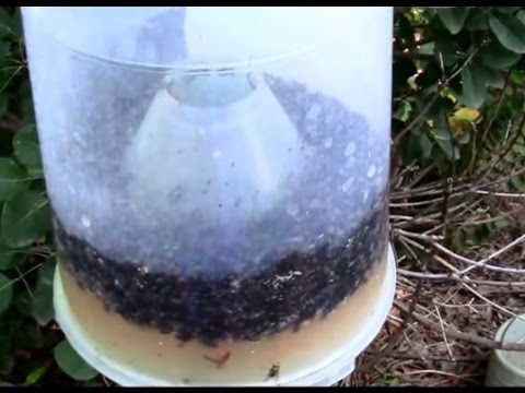 Fly Trap That Really Does Work! Seeing is believing.