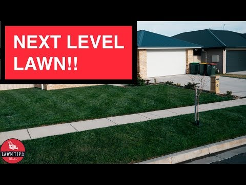 Make Your Lawn Stand Out In Your Neighbourhood | Applying Liquid Iron