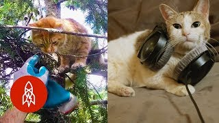 Five Stories All About Cats
