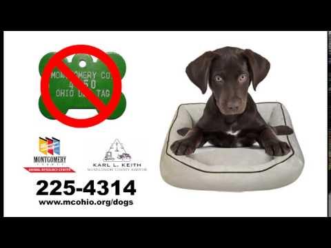 2016 Dog License Commercial 3