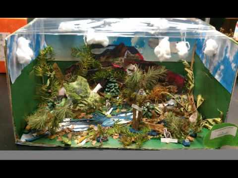 7th Grade Biome Projects