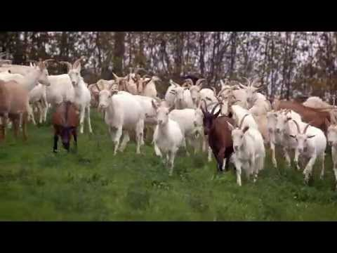 Dream of Itay: Goat Cheese in Umbria