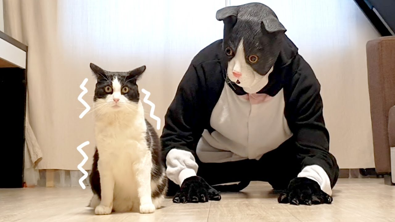 Cat Pranked By Big Cat Mask