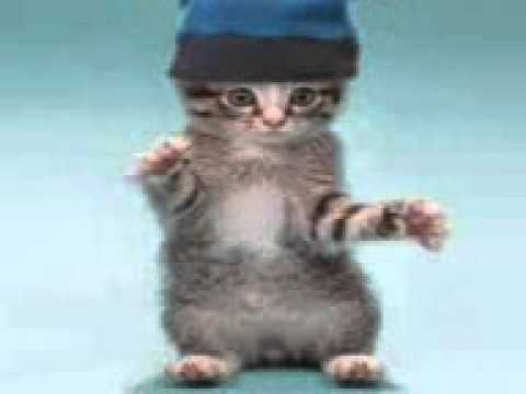 Xxx Mp4 Танцующие коты 3gp 3gp Sex